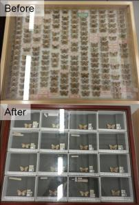 The Digitisation Project is working to re-house entomology collections and give each specimen an individual QR code for fast and efficient data extraction.