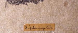 A great example of the kind of handwriting you can expect to find on older specimens. Diplommyotns, Diplomyctus, Diplonijotus, Diplonnystus? Suggestions on a postcard please. (C) UCL Grant Museum