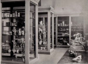 The Grant Museum as it was in the 1880s. (C) UCL / Grant Museum of Zoology
