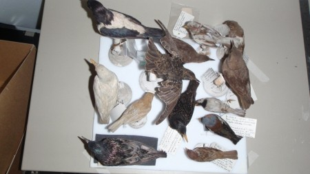 2014-06-03_birds