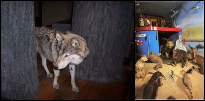 Left: An 'escapee' taxidermied grey wolf on the fringe of the 'Living Planet' gallery, Great North Museum: Hancock (2010). © Image by the author; Right: 'Abel's Ark', Hancock Museum (c.2004). © Archives of the Natural History Society of Northumbria, Great North Museum: Hancock.