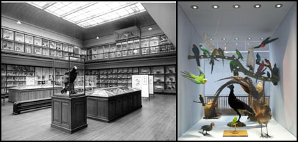 Left: The 'Bird Room', Hancock Museum (c.1966) © Archives of the Natural History Society of Northumbria, Great North Museum: Hancock; Right: 'Bio-Wall' display (detail) featuring 'Sparkie' the budgerigar (centre bottom), from 'Living Planet', Great North Museum: Hancock (2011). © Image by the author.