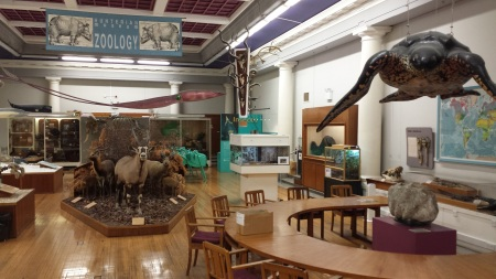 Hunterian Zoology Museum, Glasgow University. Photo: Glenn Roadley