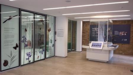 Interior of the Angela Marmont Centre, NHM