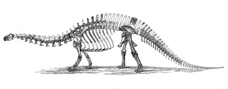 Illustration of a Brontosaurus skeleton by Charles Othniel Marsh