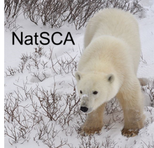 NatSCA polar bear