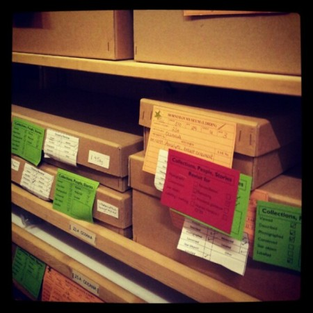 Boxes of objects in the Horniman's stored collection