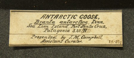 Label for Campbell's goose egg clutch
