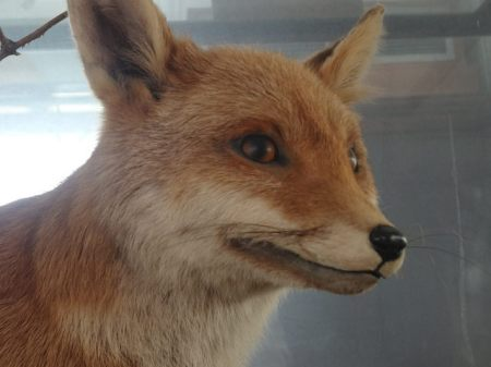 'But I'm still a fox, right?'