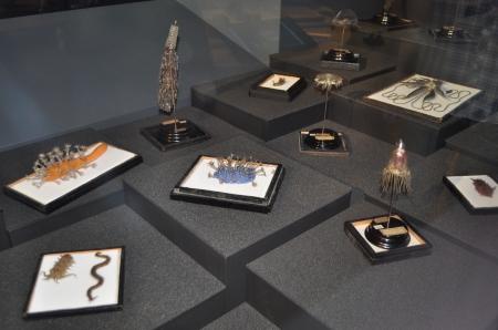 A myriad of wonderful Blashka glass models of marine invertebrates (Image: Anthony Roach)