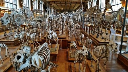 The Galerie d'anatomie comparée et de Paléontologie, Paris