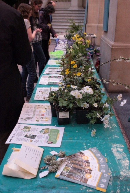 The Flower Identification table at Bristol Museum (© Bristol Culture BMAG)