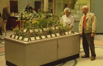 Ivor Evans at Bristol Musuem during the 1960s with the Flower table he helped develop (© Bristol Naturalist Society)