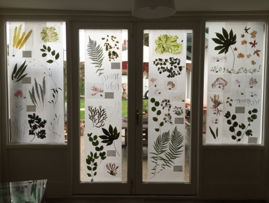 Garden windows bring to mind giant microscope slides