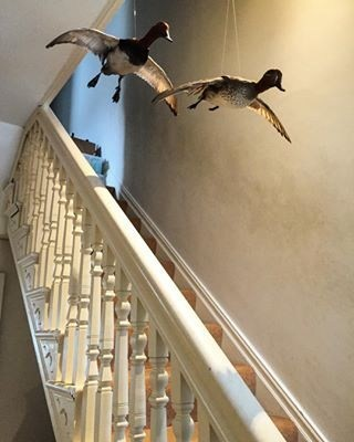 Flying taxidermy in the stairwell of the museum in a house