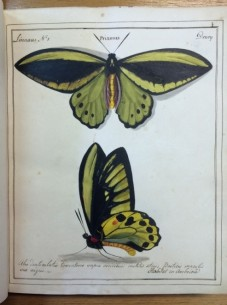 'Praimus no. 1' from William Jones' 'Icones'