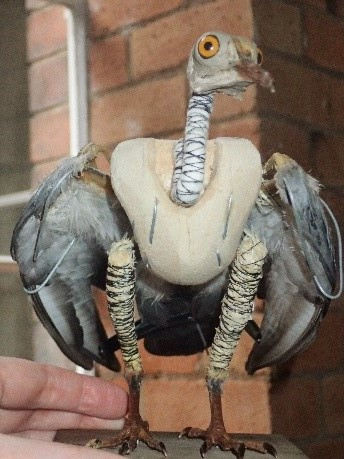 Taxidermy in progress: half-finished pigeon by Jazmine Miles-Long. Image: Sarah Scarlet-Farr