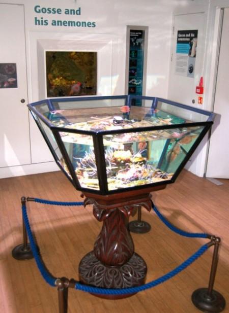 Gosse-inspired tank in the Horniman Museum & Gardens aquarium (Image: Horniman Museum & Gardens)