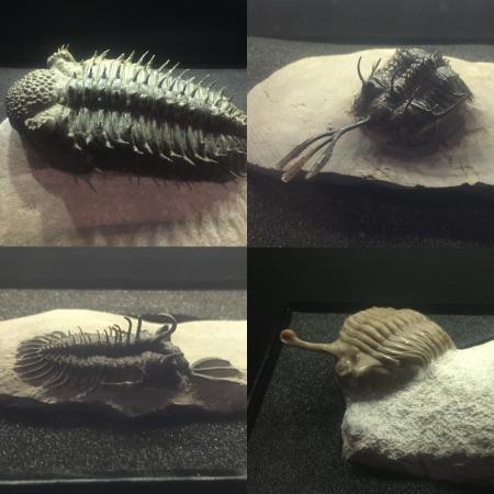 trilobite-montage