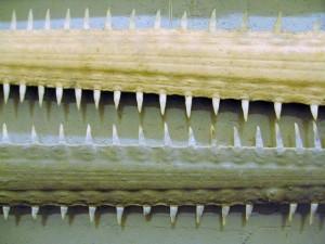 Sawfish rostra (Wikimedia Commons)