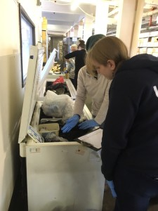 "Cold Case Curation in action; the team of five volunteers ""surveying"" the ""fauna"" of our freezers"