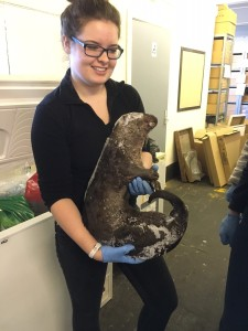 Volunteer, Laura Carter with River Otter discovery from freezer