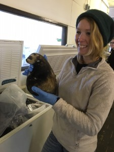 "Volunteer, Jessica Mitchell proudly wielding a polecat from the freezer ""faunal assemblage"""