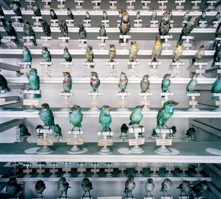 (c) Richard Ross, Museum National D'Histoire Naturelle, Paris, France 1982 2-1