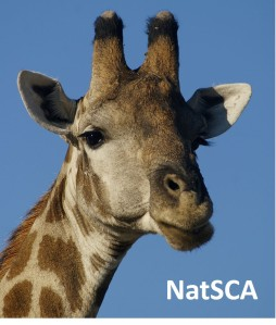 """What shall I do this month?"" Namibian giraffe, image in public domain"