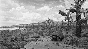 Hiroshi Sugimoto, Galapagos, 1980 © Hiroshi Sugimoto, courtesy Pace Gallery.