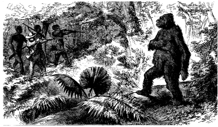 Illustration from 'Wild life under the equator. Narrated for young people'. Paul Chaillu (1896)