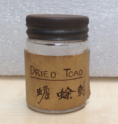 dried toad